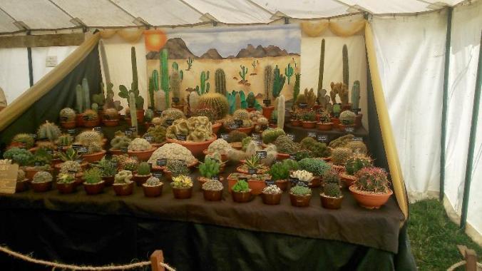 DORSET COUNTY SHOW Sept 13 Cacti