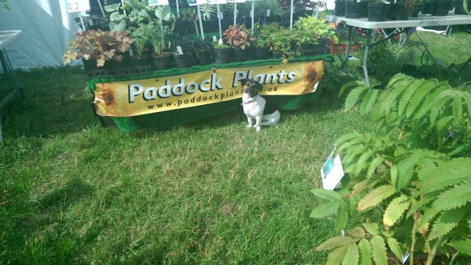Penny guards the Paddock Plants stand at the Dorset  County Show